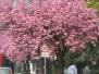 Frühling 2009