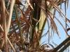 20090413_Garten008.jpg